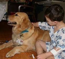Paws to Pet Program